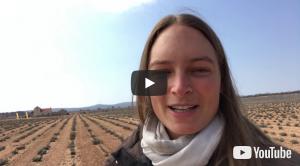 Video 0053: Helichrysum – Erinnerung an vollkommenes Wohlbefinden