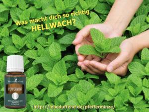 Die besten Anwendungen mit ätherischem Pfefferminzöl