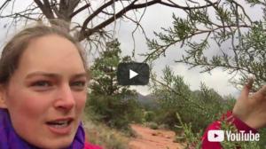 Video 0051: Wacholder – eine kraftvolle Pflanze zum Reinigen und Loslassen